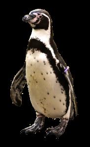 penguin-2691407_1920